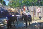 DNM-LH-horses-720x480